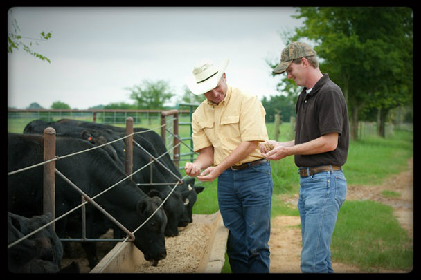 CK Cattle Chuck & Charlie Madaris