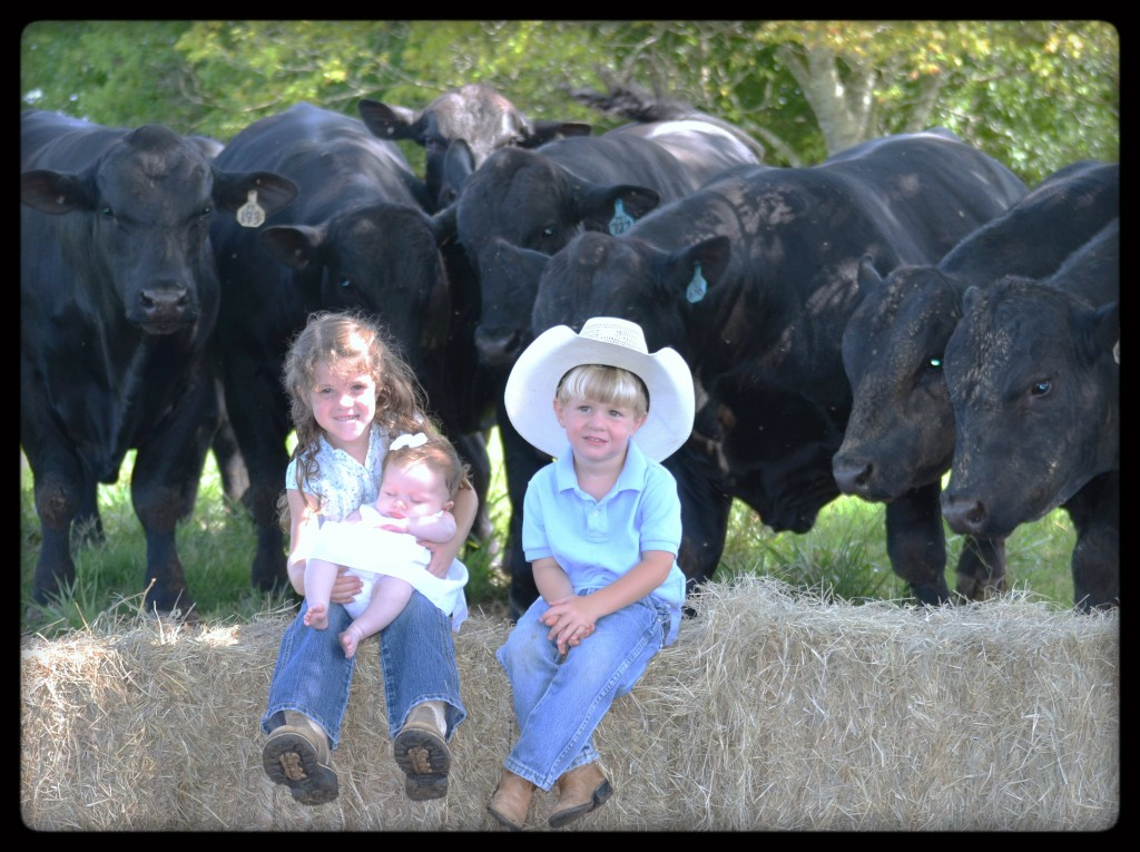 The Grandchildren with some gentle ChiAngus bulls
